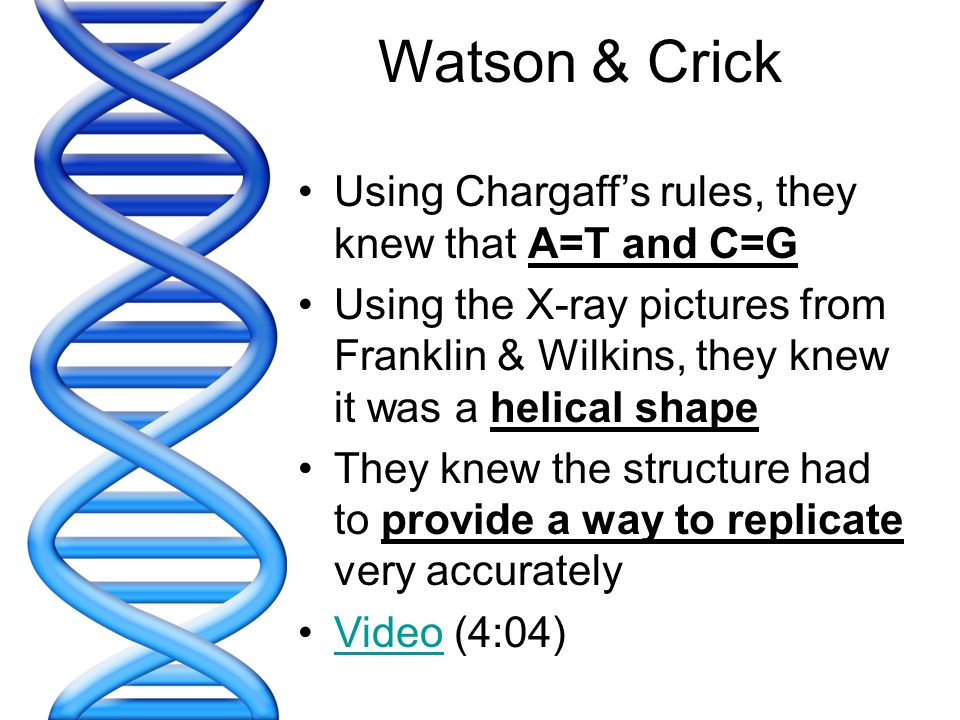 Watson & Crick Using Chargaff's rules, they knew that A=T and C=G
