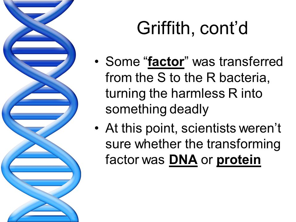 Griffith, cont'd Some factor was transferred from the S to the R bacteria, turning the harmless R into something deadly.