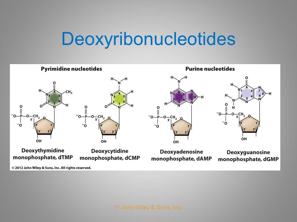 Deoxyribonucleotides