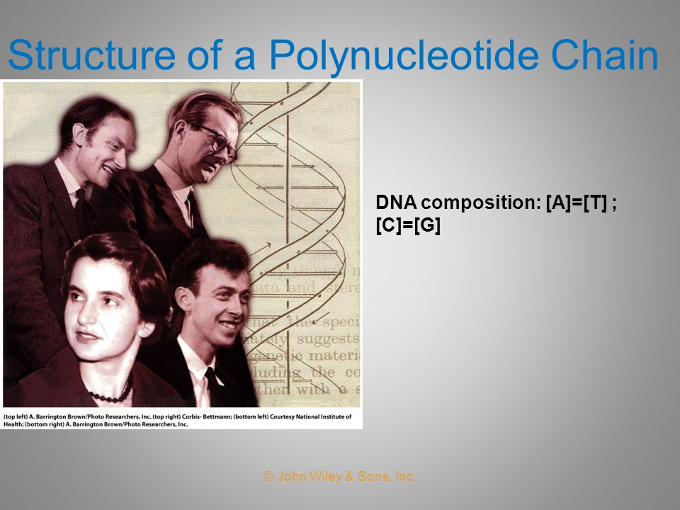 Structure of a Polynucleotide Chain