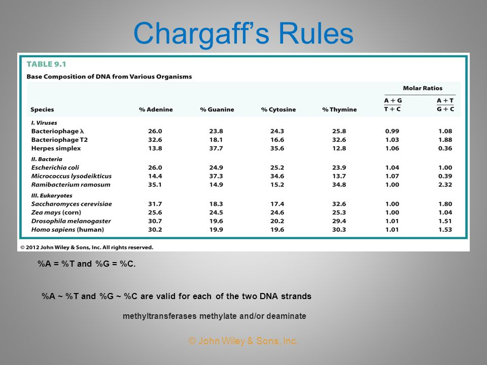 Chargaff's Rules © John Wiley & Sons, Inc. %A = %T and %G = %C.