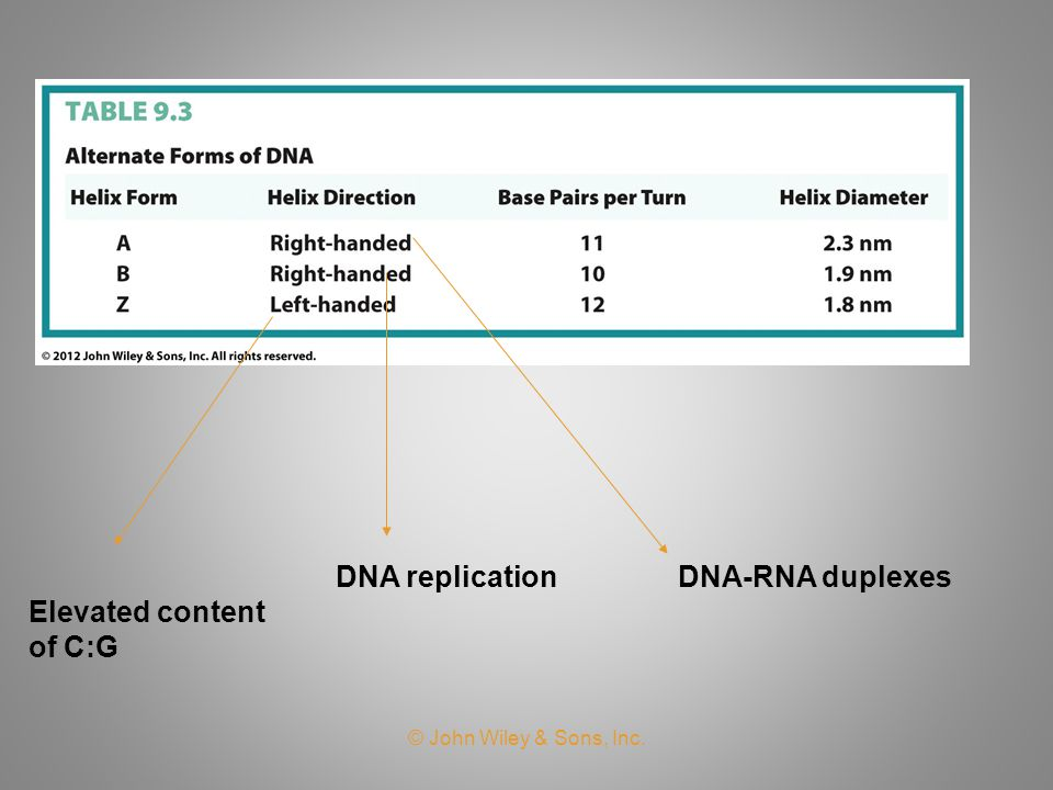 DNA replication DNA-RNA duplexes Elevated content of C:G