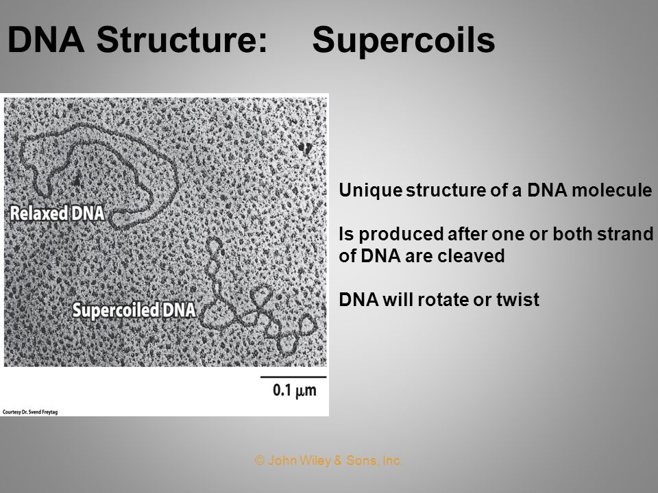 DNA Structure: Supercoils