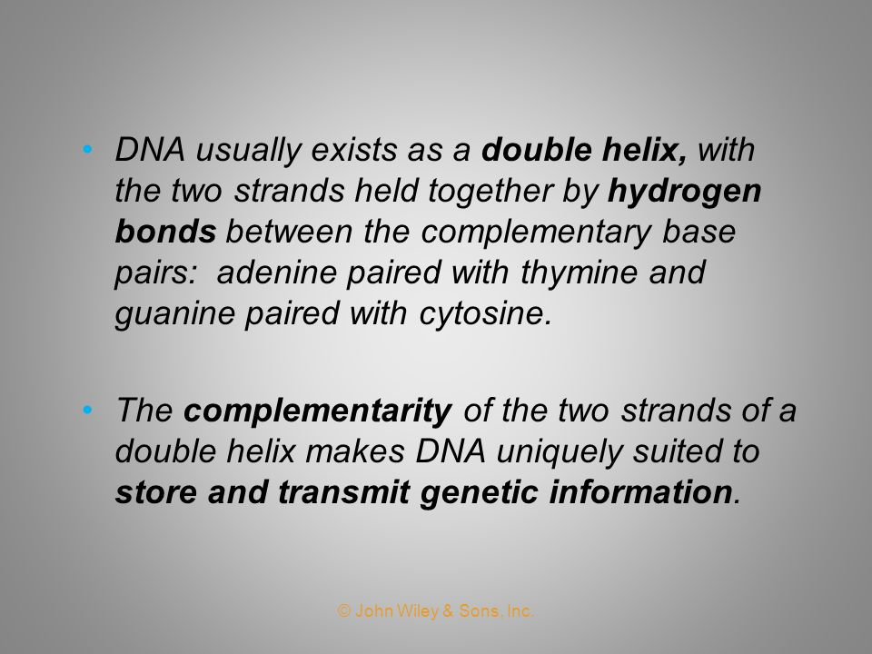 DNA usually exists as a double helix, with the two strands held together by hydrogen bonds between the complementary base pairs: adenine paired with thymine and guanine paired with cytosine.