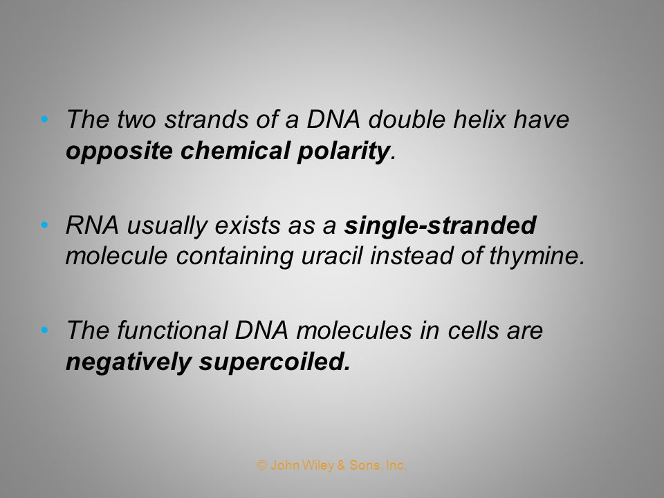 The two strands of a DNA double helix have opposite chemical polarity.