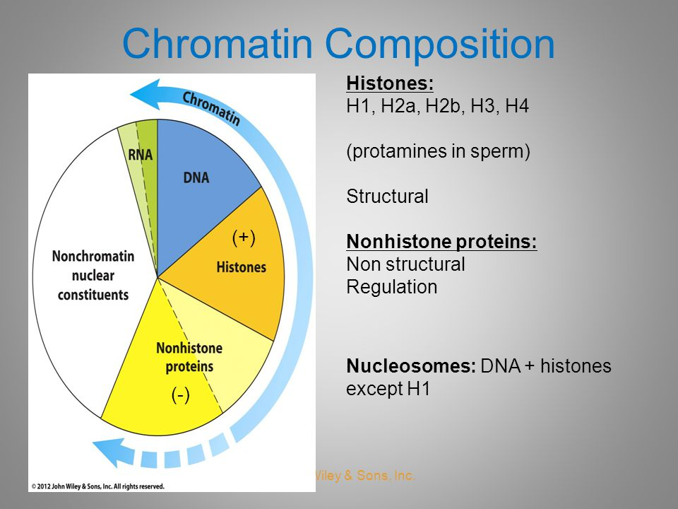 Chromatin Composition