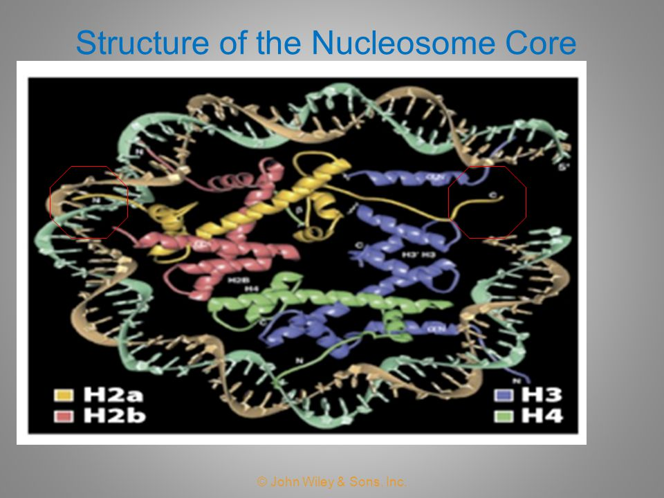 Structure of the Nucleosome Core