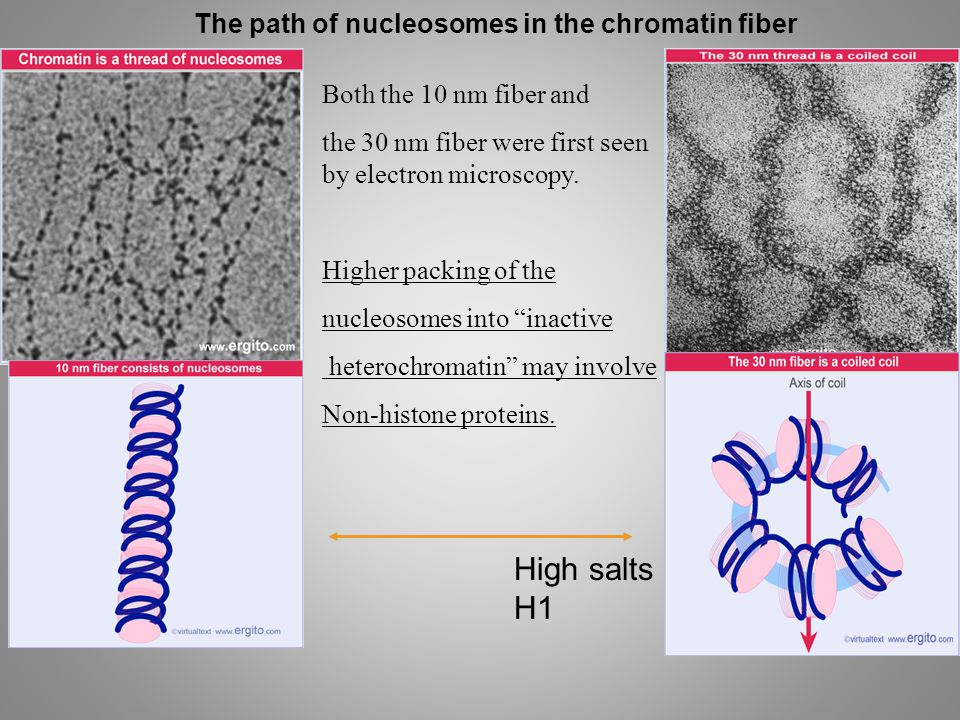 High salts H1 The path of nucleosomes in the chromatin fiber