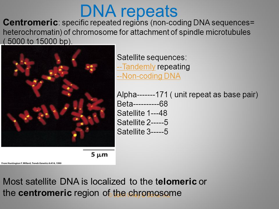 DNA repeats Centromeric: specific repeated regions (non-coding DNA sequences= heterochromatin) of chromosome for attachment of spindle microtubules.