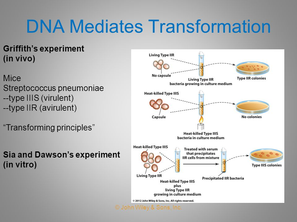 DNA Mediates Transformation