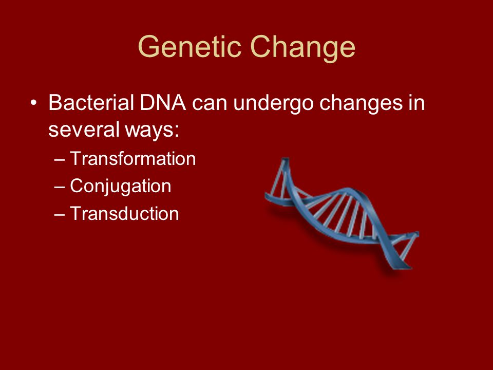 Genetic Change Bacterial DNA can undergo changes in several ways: