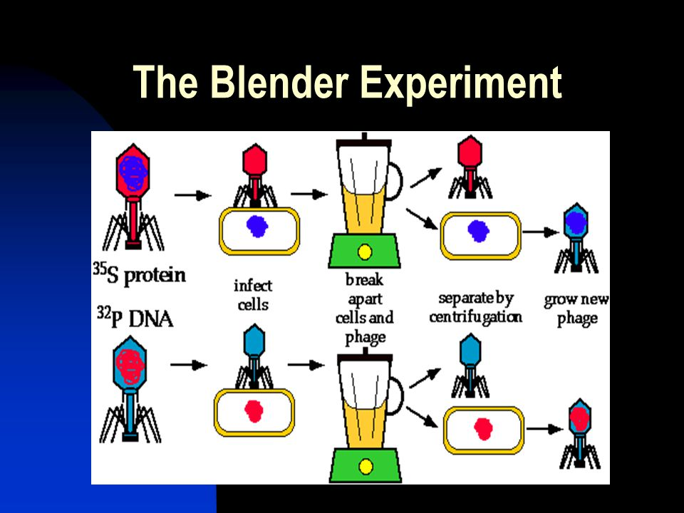 The Blender Experiment