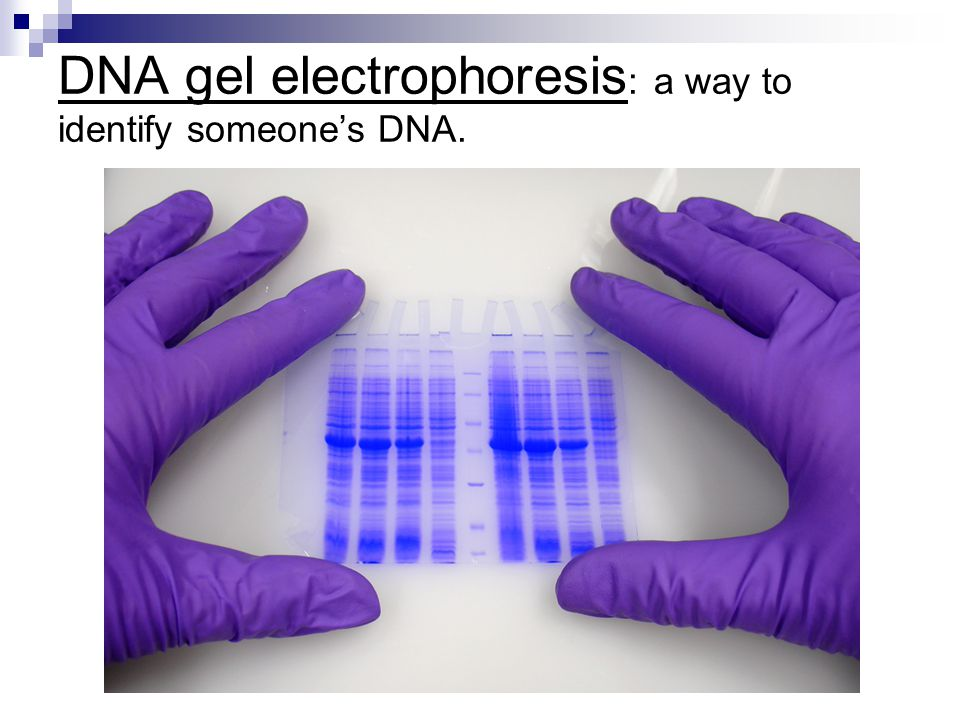 DNA gel electrophoresis: a way to identify someone's DNA.