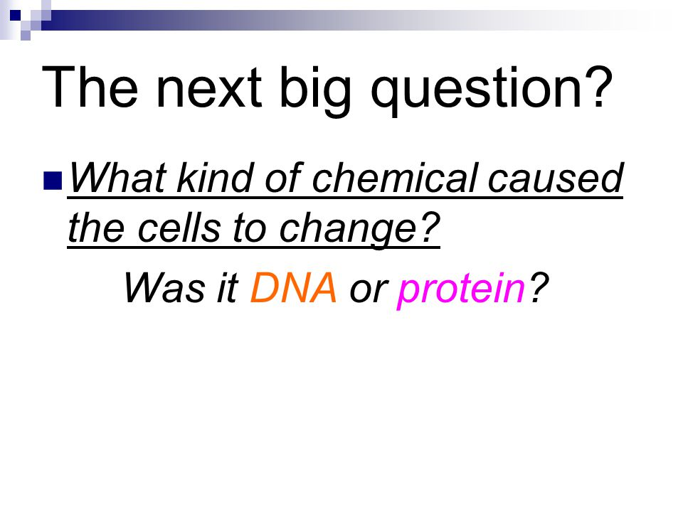 The next big question What kind of chemical caused the cells to change Was it DNA or protein
