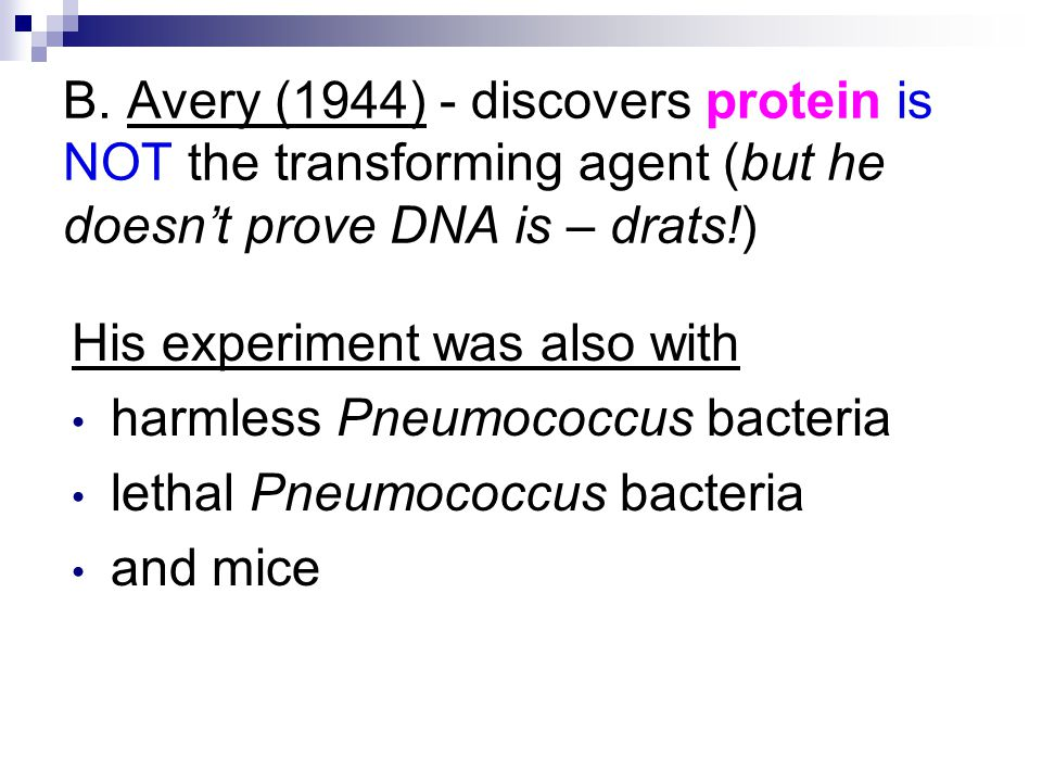 B. Avery (1944) - discovers protein is NOT the transforming agent (but he doesn't prove DNA is – drats!)