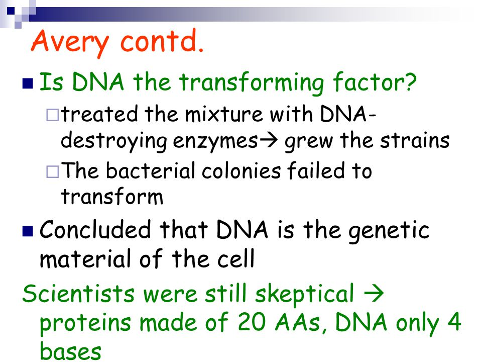 Avery contd. Is DNA the transforming factor
