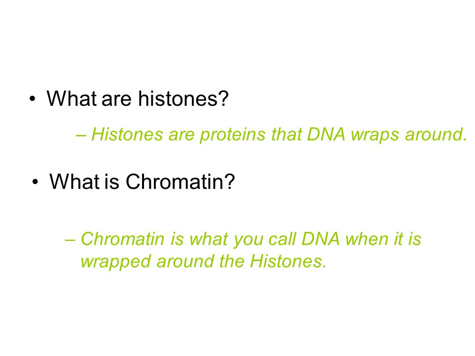 What are histones What is Chromatin