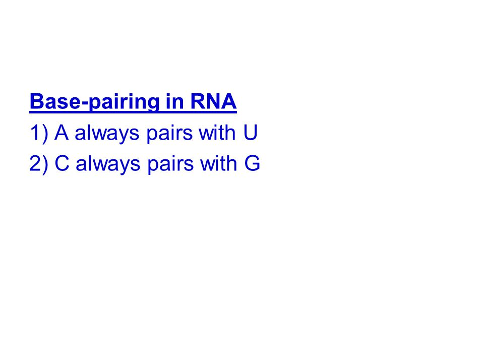 Base-pairing in RNA 1) A always pairs with U 2) C always pairs with G