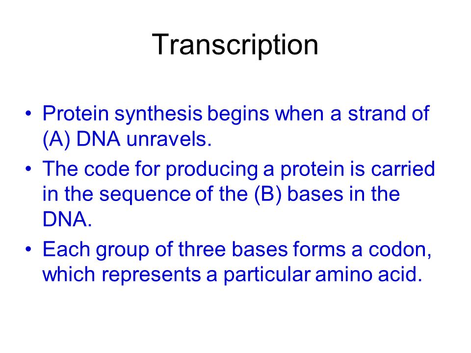 Transcription Protein synthesis begins when a strand of (A) DNA unravels.