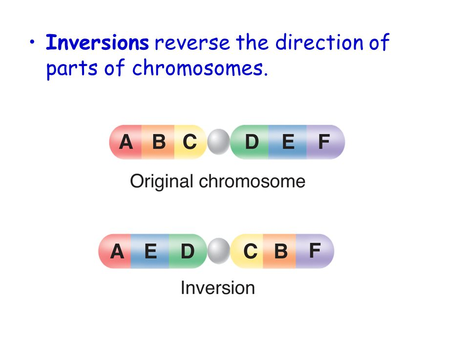 Inversions reverse the direction of parts of chromosomes.