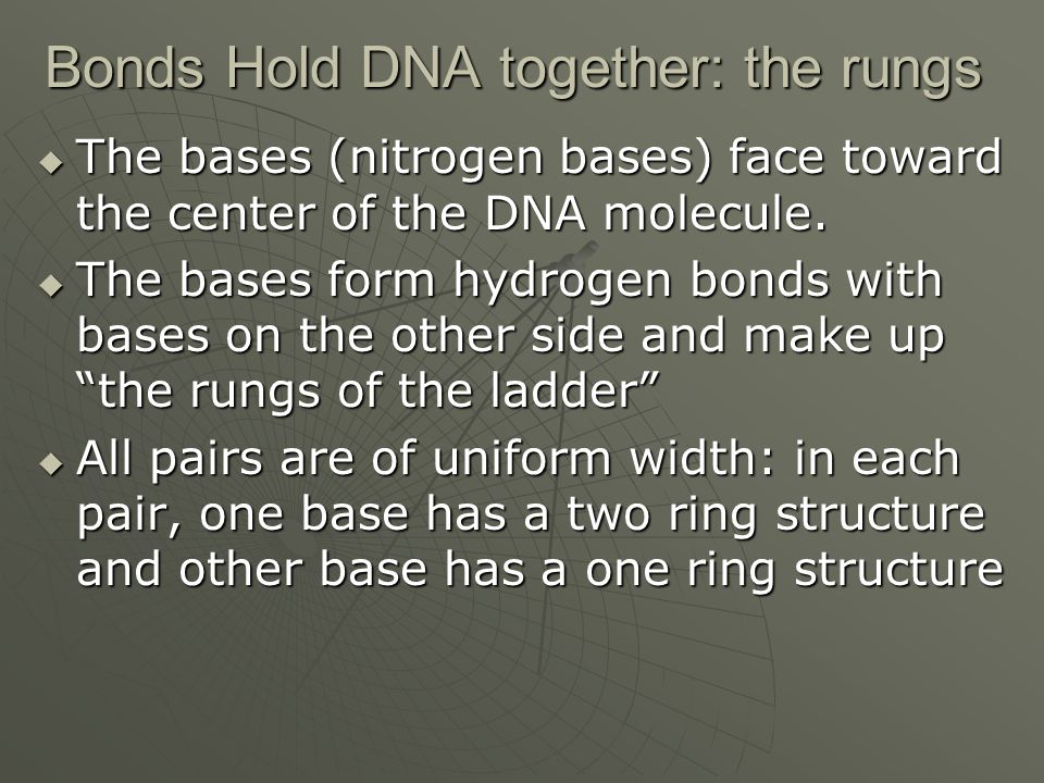 Bonds Hold DNA together: the rungs