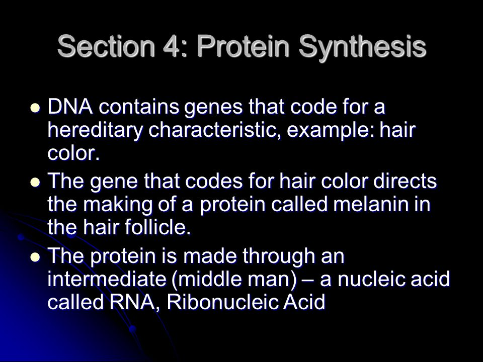 Section 4: Protein Synthesis