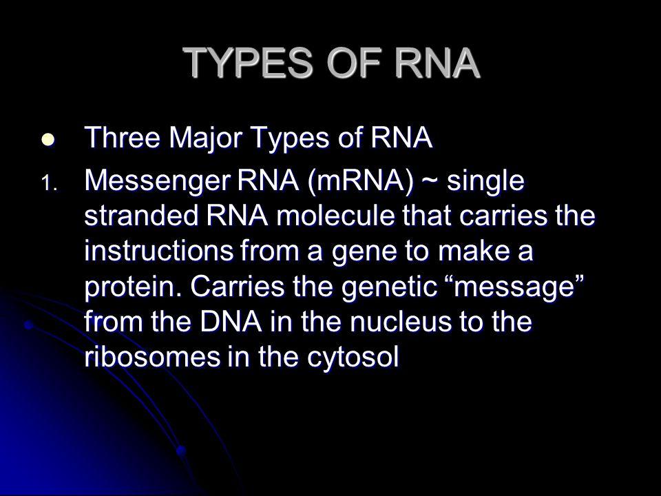 TYPES OF RNA Three Major Types of RNA