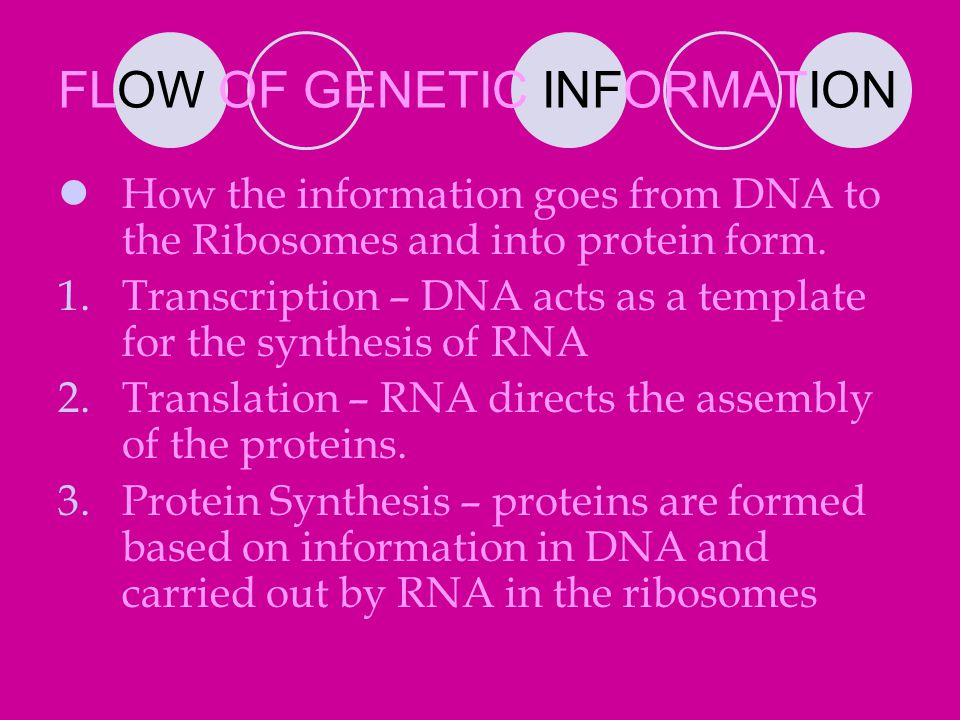 FLOW OF GENETIC INFORMATION