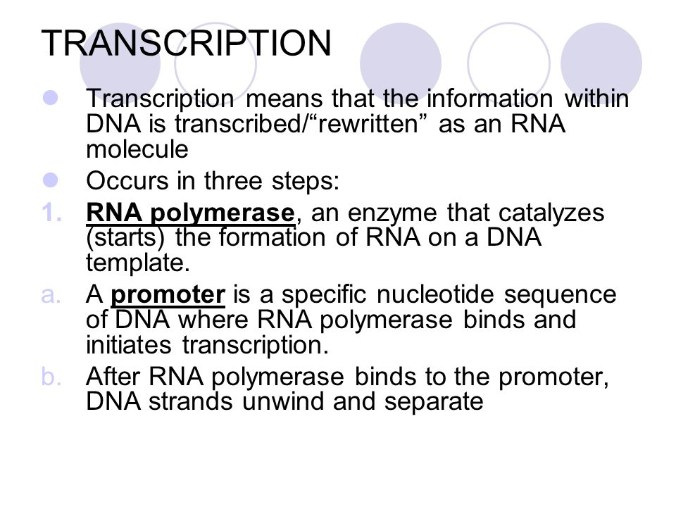 TRANSCRIPTION Transcription means that the information within DNA is transcribed/ rewritten as an RNA molecule.