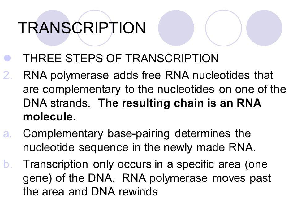 TRANSCRIPTION THREE STEPS OF TRANSCRIPTION
