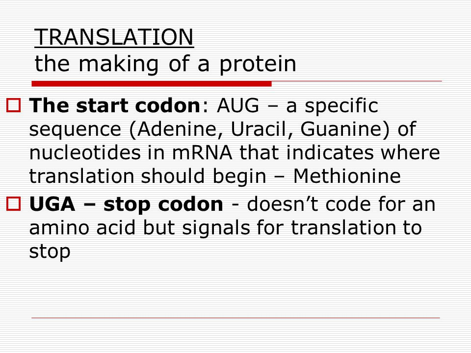 TRANSLATION the making of a protein