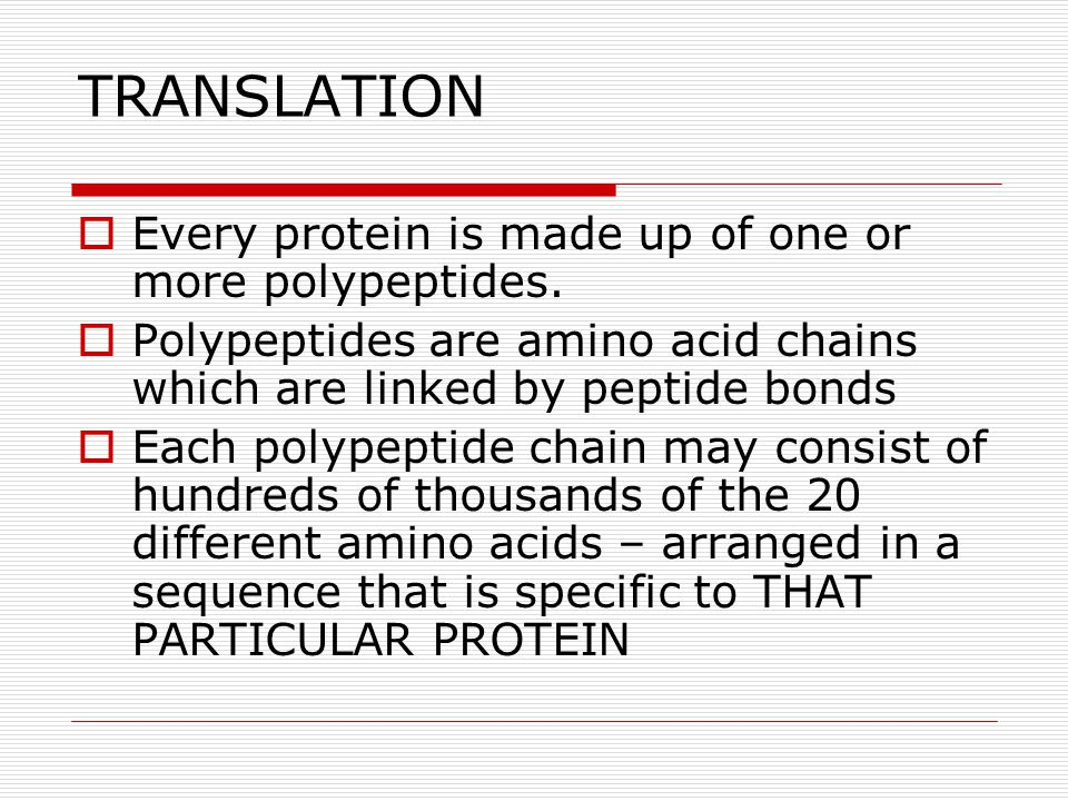 TRANSLATION Every protein is made up of one or more polypeptides.