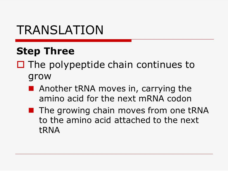 TRANSLATION Step Three The polypeptide chain continues to grow