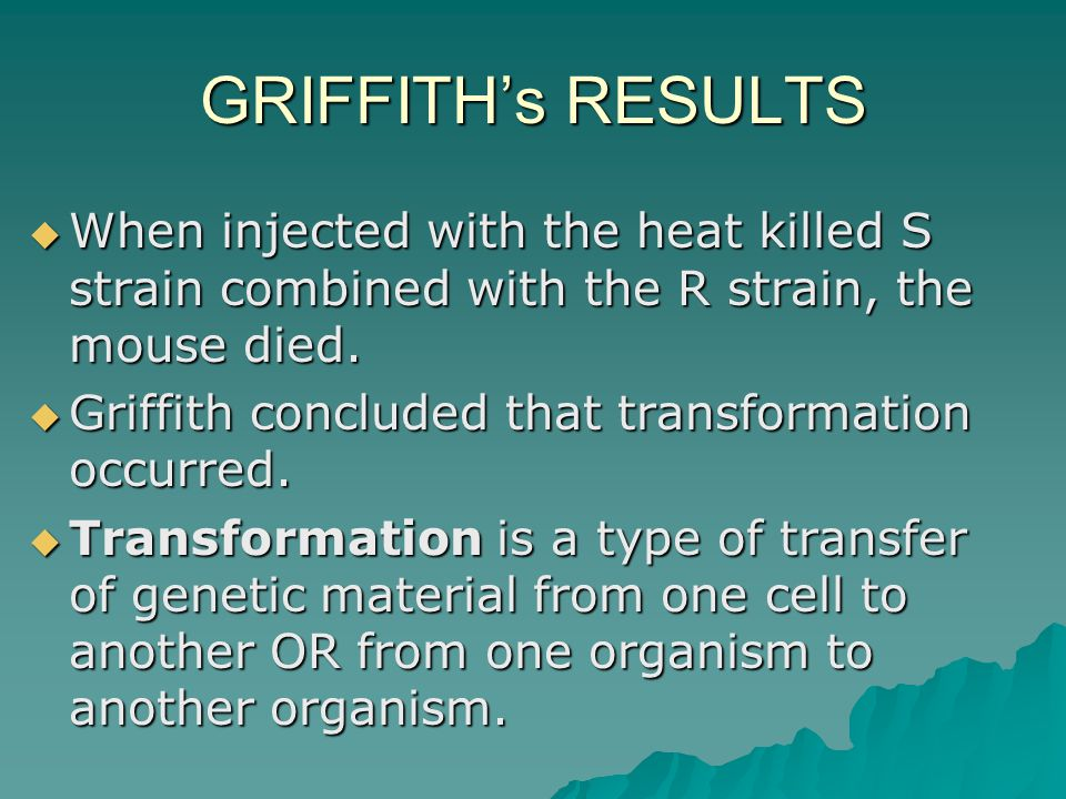 GRIFFITH's RESULTS When injected with the heat killed S strain combined with the R strain, the mouse died.