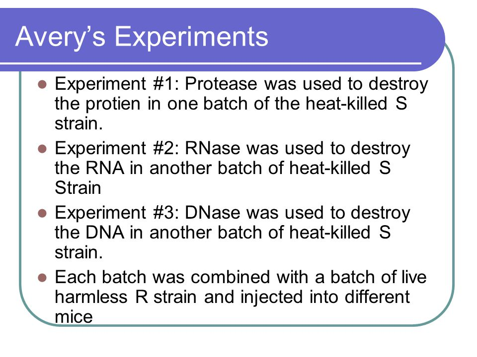 Avery's Experiments Experiment #1: Protease was used to destroy the protien in one batch of the heat-killed S strain.