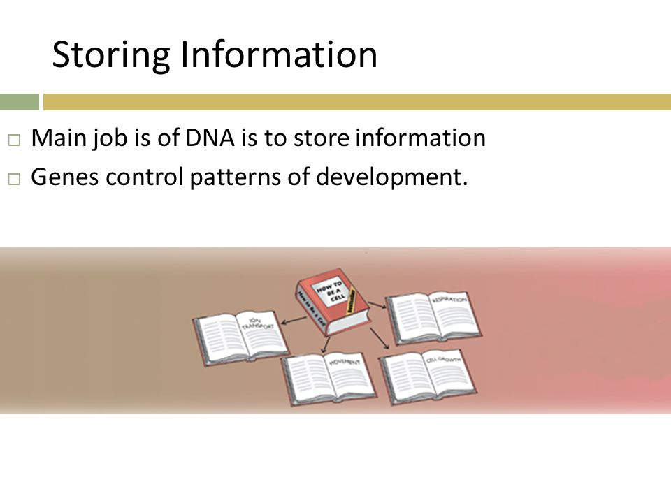 Storing Information Main job is of DNA is to store information
