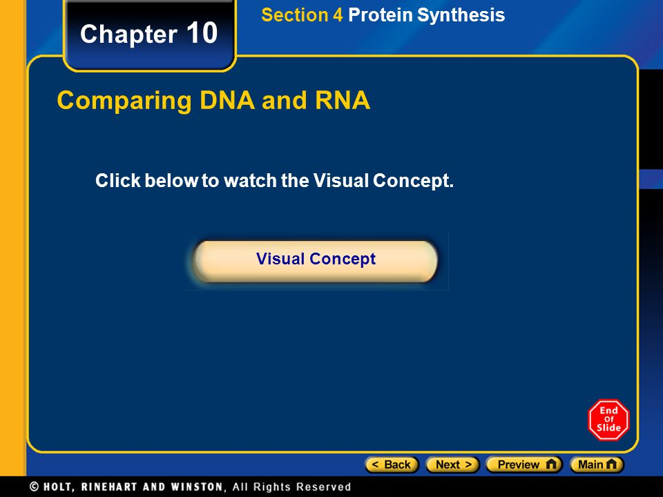 Chapter 10 Comparing DNA and RNA Section 4 Protein Synthesis