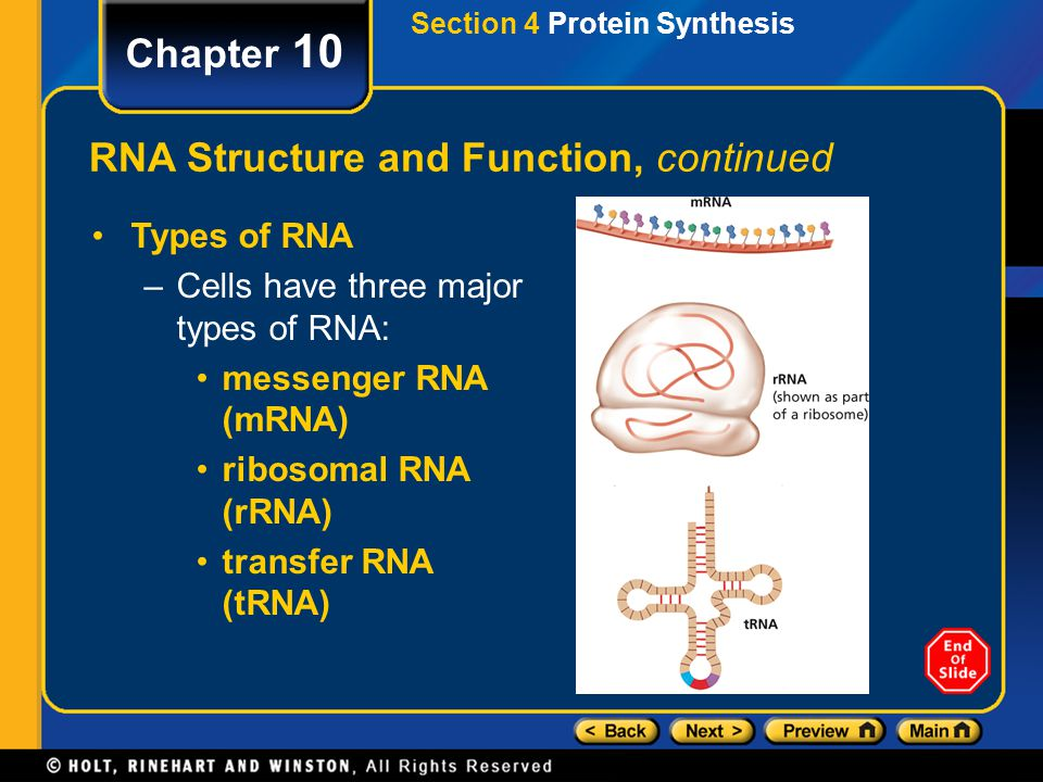 RNA Structure and Function, continued