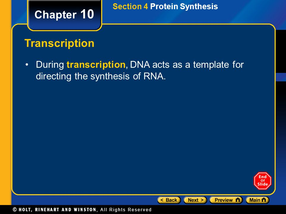 Chapter 10 Transcription