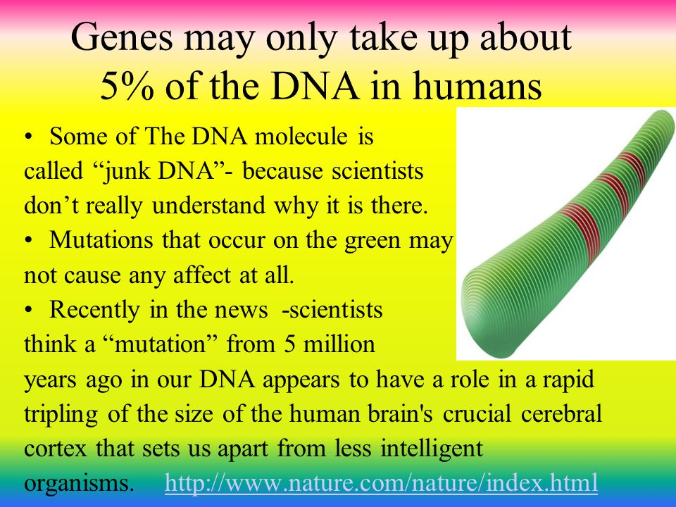 Genes may only take up about 5% of the DNA in humans