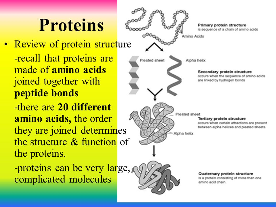 Proteins Review of protein structure