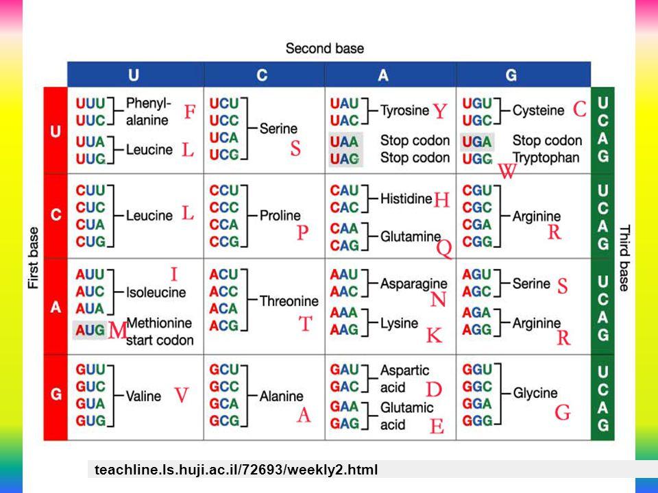 teachline.ls.huji.ac.il/72693/weekly2.html