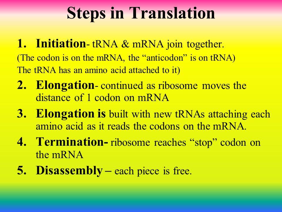 Steps in Translation Initiation- tRNA & mRNA join together.
