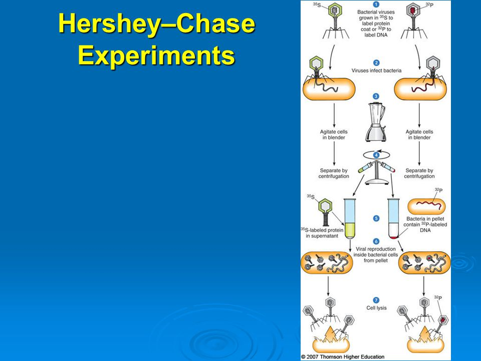 Hershey–Chase Experiments