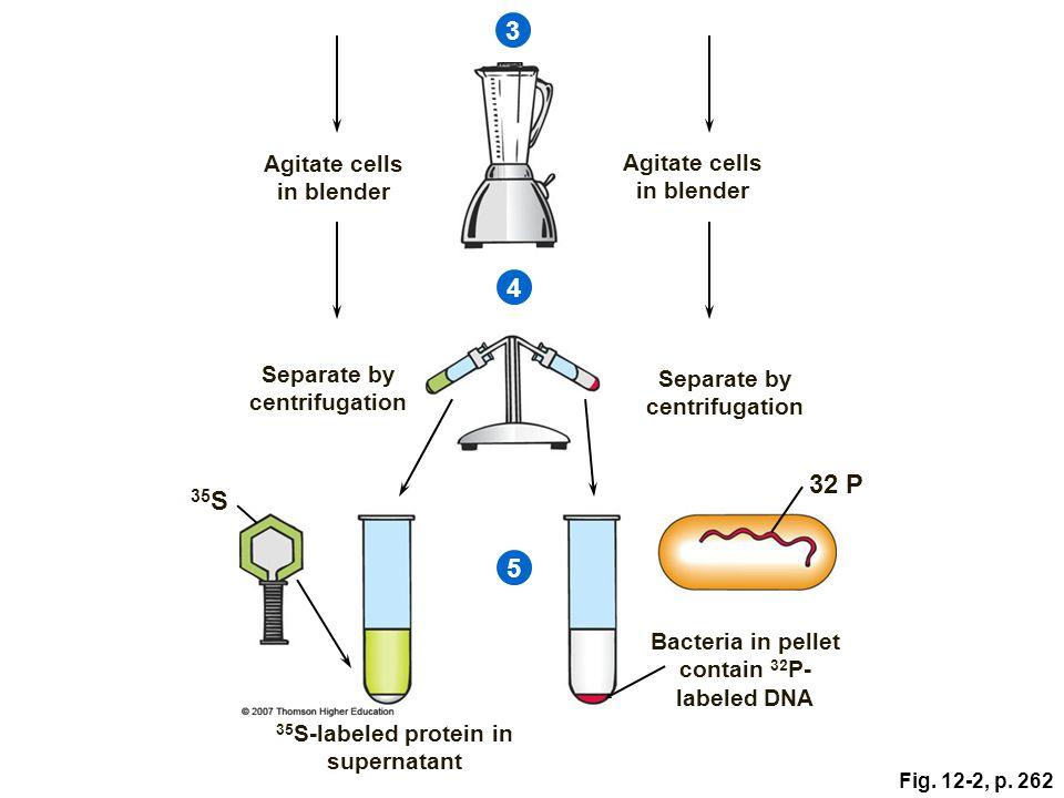 3 4 32 P 35S 5 Agitate cells in blender Agitate cells in blender