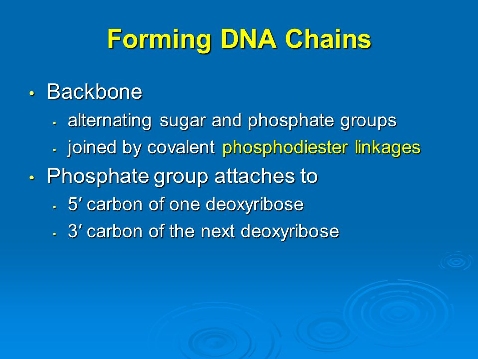 Forming DNA Chains Backbone Phosphate group attaches to