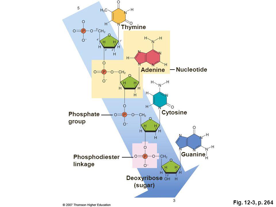 Phosphodiester linkage