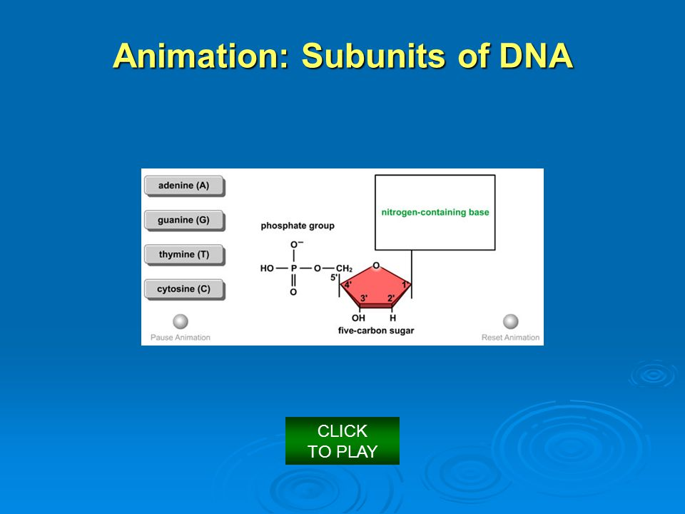 Animation: Subunits of DNA
