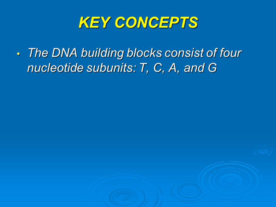 KEY CONCEPTS The DNA building blocks consist of four nucleotide subunits: T, C, A, and G