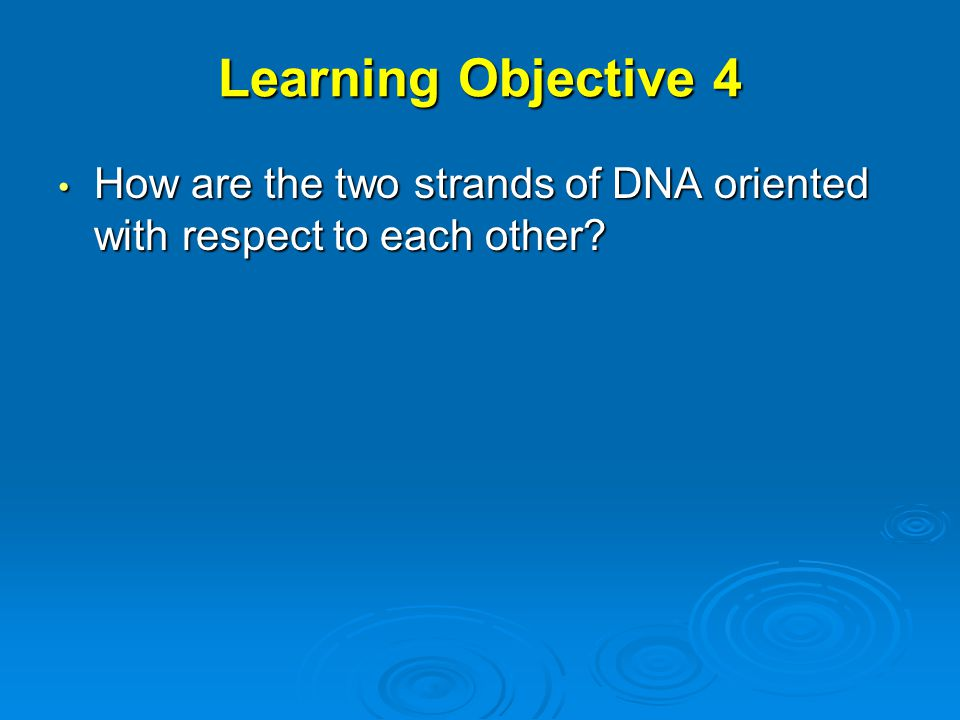 Learning Objective 4 How are the two strands of DNA oriented with respect to each other